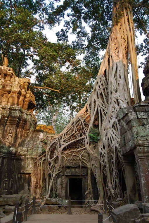"The ""Tomb Raider Temple"", Ta Prohm"
