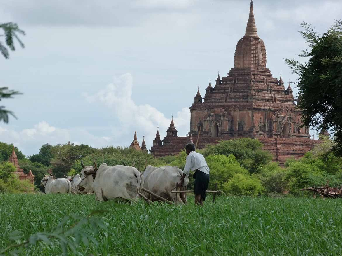 Bagan during the green season