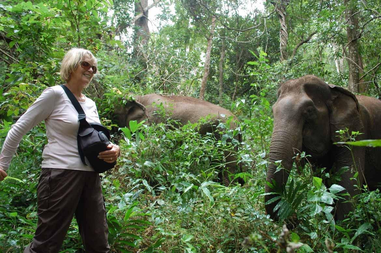 Walking with elephants