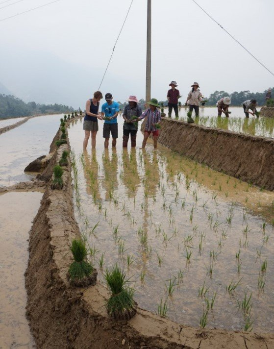 Mr Tien helping me to separate the rice seedlings ready for planting