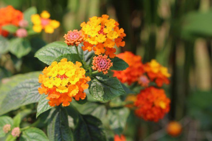 Dalat flower festival in Vietnam
