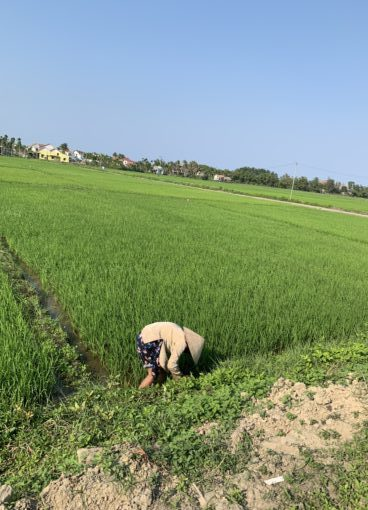 Countryside around Hoi An, Vietnam